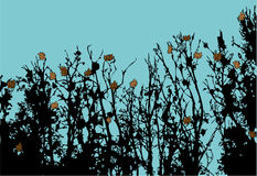 jesień póżno Zdjęcia Stock