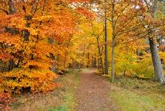 jesień póżno Zdjęcie Stock