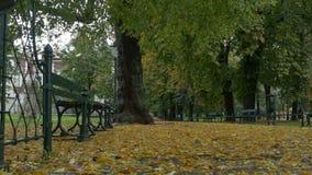 Jesień Pada w parku zbiory