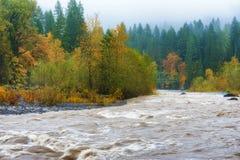 Jesień Pada wzdłuż Piaskowatej rzeki Zdjęcia Stock