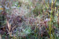 Jesień pająka mokra sieć Zdjęcia Royalty Free