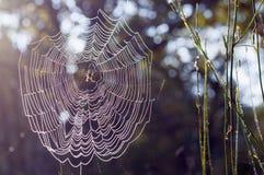 Jesień pająka mokra sieć Zdjęcie Stock