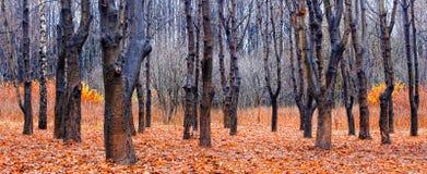 jesień park Obraz Royalty Free