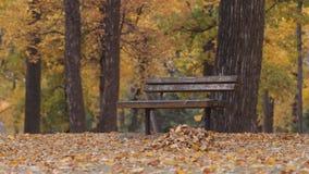 Jesień park zdjęcie wideo