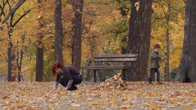 Jesień park zbiory wideo