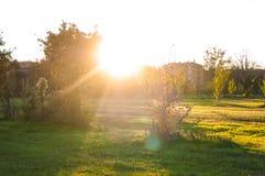 Jesień park i mnóstwo kolorów żółtych liście, aleja w parku sunlight fotografia royalty free