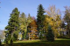 Jesień park i yelow drzewo fotografia royalty free