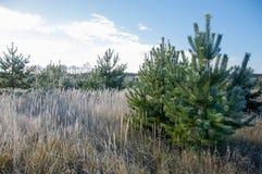 Jesień park Koniec zdjęcie royalty free
