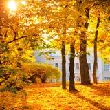Jesień park lub las Zdjęcia Royalty Free