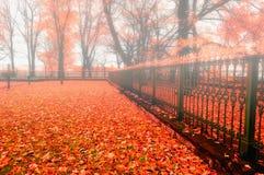 Jesień park w mgłowej pogodzie - kolorowy jesieni natury krajobraz Zdjęcia Stock