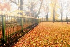 Jesień park w mgłowej pogodzie - kolorowy jesieni natury krajobraz Zdjęcie Stock