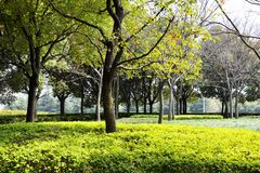 Jesień park w ranku w chmurnej pogodzie Obrazek jesieni park Wrześni krajobrazy w parku Chmurząca pogoda Parkowe aleje fotografia royalty free