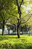 Jesień park w ranku w chmurnej pogodzie Obrazek jesieni park Wrześni krajobrazy w parku Chmurząca pogoda Parkowe aleje obrazy stock