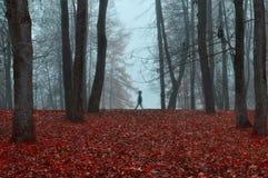 Jesień park w zwartej mgle z widmowym sylwetki jesieni krajobrazem z jesieni drzewami i czerwień suchymi spadać liśćmi Obrazy Stock