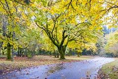 Jesień park z ogromnymi drzewami i drogą fotografia stock