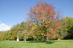 Jesień park z wiśnią Zdjęcie Royalty Free