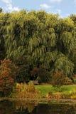 Jesień parka krajobraz Zdjęcie Stock