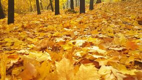 Jesień parka spadku liści park, natura Listopadu ulistnienie zbiory