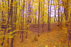 jesień parkowy lasowy Listopad opuszcza Października, wiejski kolor żółty obrazy royalty free