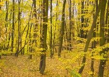 jesień parkowy lasowy Listopad opuszcza, wiejski kolor żółty obrazy royalty free