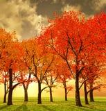 jesień piękna Zdjęcia Stock