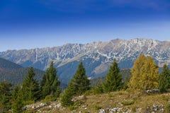 jesień piękna ulistnienia góry sceneria Obrazy Royalty Free