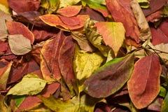 Jesień Piękni Barwioni liście Zdjęcie Stock