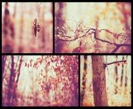 Jesień piękny kolaż Fotografia Royalty Free