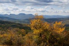 Jesień piękny las Zdjęcia Stock
