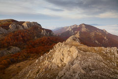 Jesień piękny las Zdjęcie Royalty Free