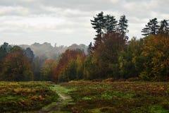 jesień piękny spadek lasu krajobraz wibrujący obrazy stock