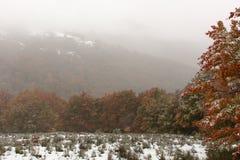 Jesień pierwszy śnieg Zdjęcia Stock