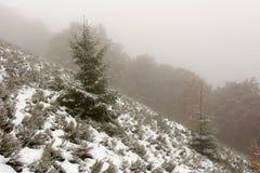 Jesień pierwszy śnieg Zdjęcie Royalty Free