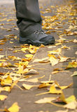 jesień podróż obrazy royalty free