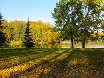 Jesień pogodny park z pięknym jeziorem Jaskrawi barwioni drzewa ar obraz royalty free
