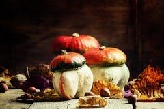 jesień pojęcia odosobniony biel Dekoracyjna bania ono rozrasta się na roczniku drewnianym zdjęcie stock