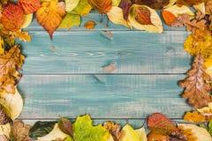 jesień pojęcia odosobniony biel Obramia opanowanego kolorowi jesień liście na zielonym drewnianym tle Fotografia Stock