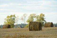 jesień pole Zdjęcie Royalty Free