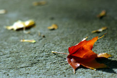 Jesień pomarańczowy liść zdjęcie royalty free