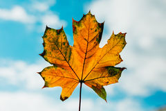Jesień pomarańczowy liść Fotografia Royalty Free