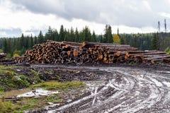 Jesień ponury krajobraz Mokra droga gruntowa, magazyn powalać drzewo Zdjęcia Stock