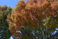 jesień popołudniowy błysk światła słonecznego żadny drzewo fotografia stock