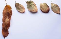Jesień projekta element Narożnikowa rama piękni spadać liście Fotografia Royalty Free