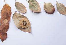 Jesień projekta element Narożnikowa rama piękni spadać liście i złocisty cryptocurrency złota bitcoin Zdjęcie Royalty Free