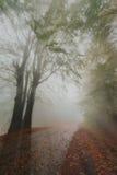Jesień promienie Zdjęcia Royalty Free