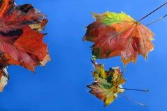 Jesień prześcieradła Obrazy Royalty Free