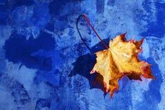 Jesień prześcieradło Zdjęcia Stock