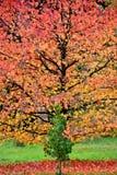 Jesień przy Lynford arboretum zdjęcie royalty free