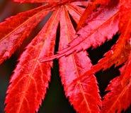Jesień przy Lynford arboretum obraz stock