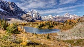 Jesień przy Opabin plateau zdjęcia royalty free